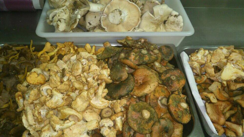 BuscaSetas 2012: níscalos, angulas de monte, cándidas, pie mouton...